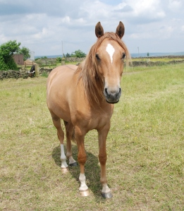 2 year old Honey - out of Ella (Caeser) by FS Don't Worry