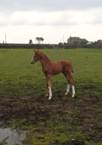 The most adorable foal EVER!  Just Wilham